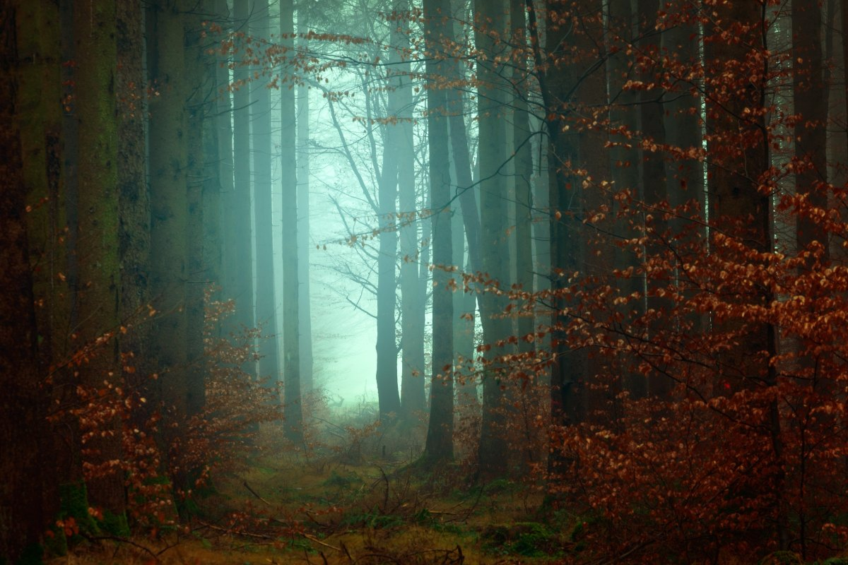 deep forest with mist