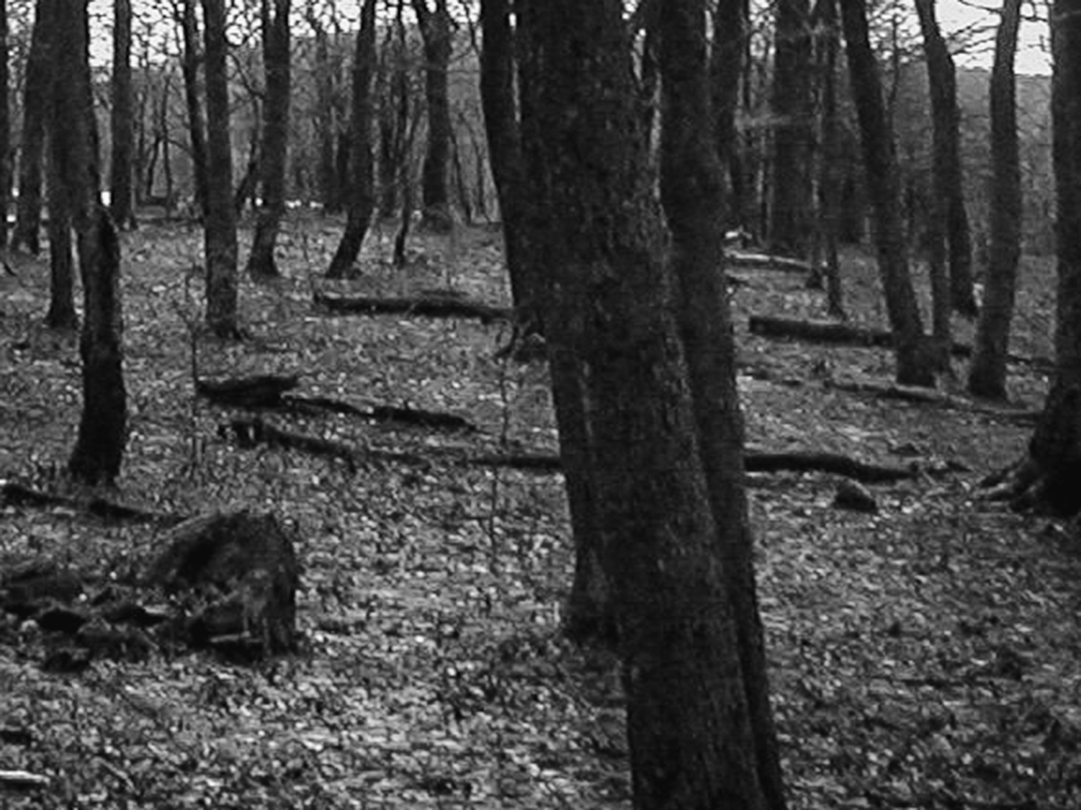 dark black and white photo of trees in winter